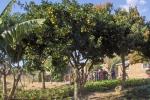 Gardens018