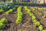 Gardens021