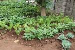 Gardens043